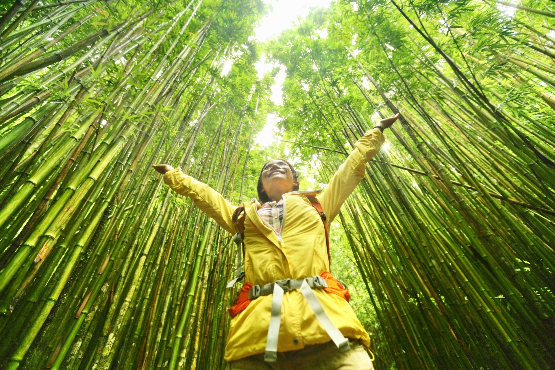 ¿Porqué Costa Rica es líder en turismo sostenible en las Américas?