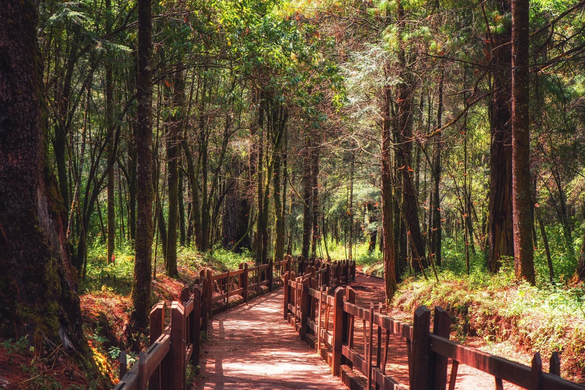 SantuarioMariposa1.jpg