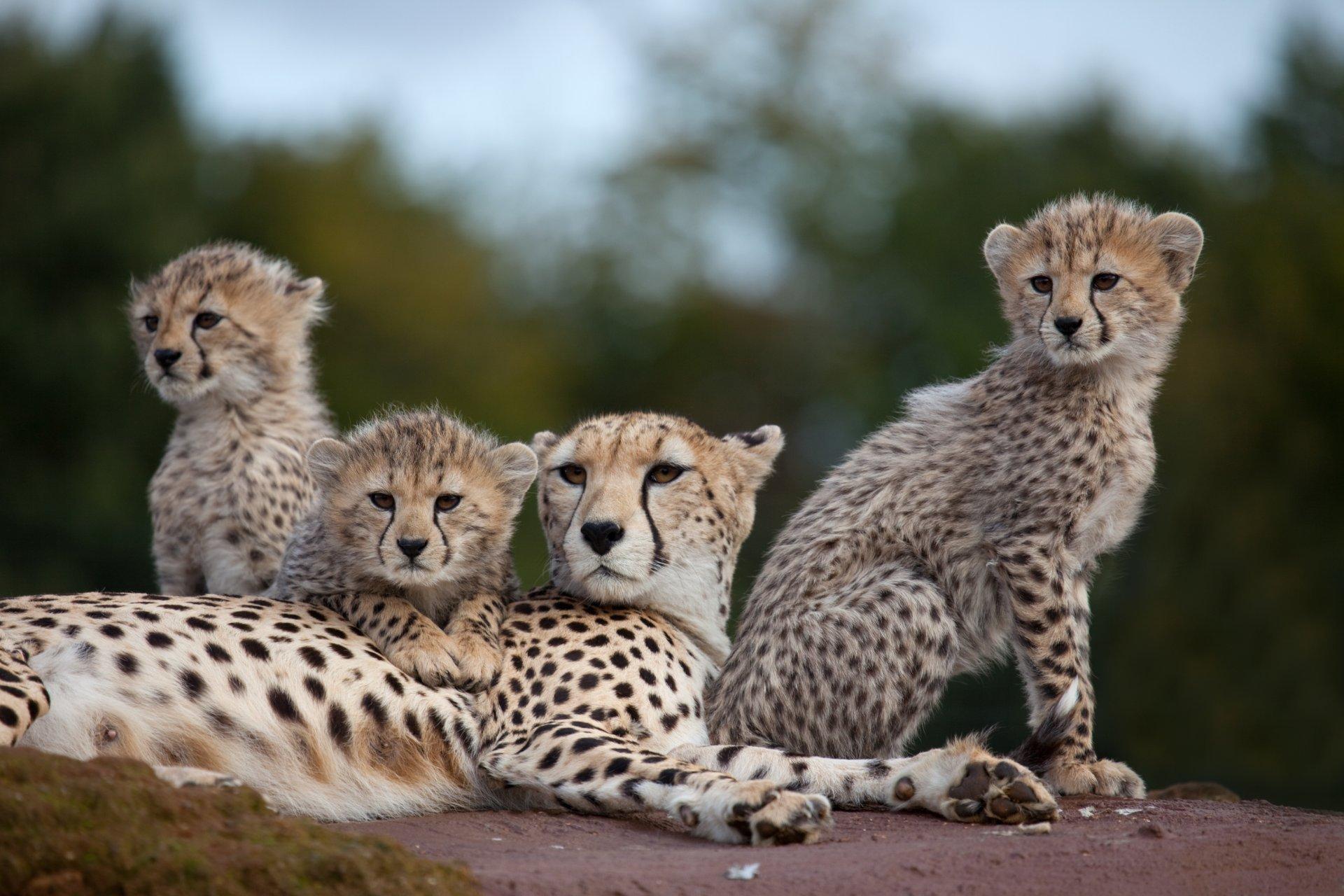Los tres regalos del Serengeti