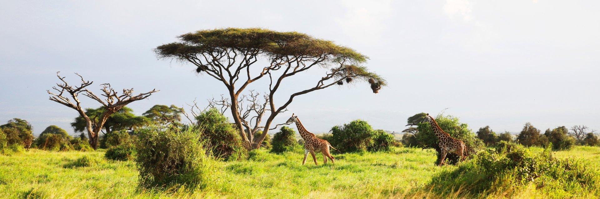 Programa de reforestación en Kenia