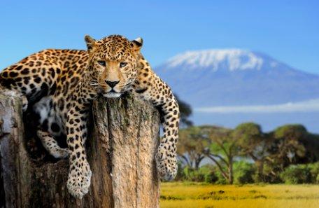 POESIA DE AFRICA: KENIA, TANZANIA Y RUANDA