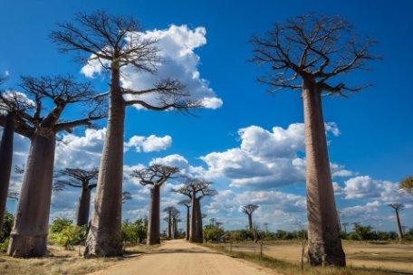 ESENCIA DE MADAGASCAR Y BAOBABS