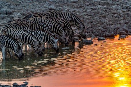 CONTRASTES DE NAMIBIA