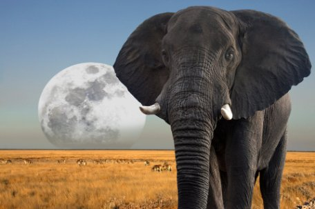 POSTALES DE NAMIBIA