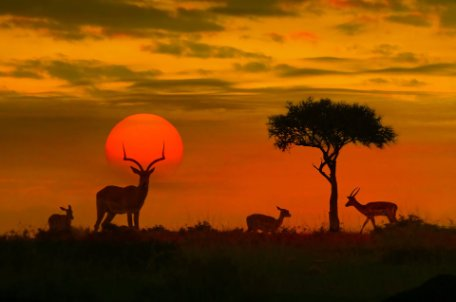 ESENCIA DE SUDÁFRICA y CATARATAS VICTORIA (lado de Zambia)
