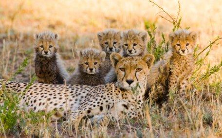 VIVIENDO TANZANIA EN FAMILIA