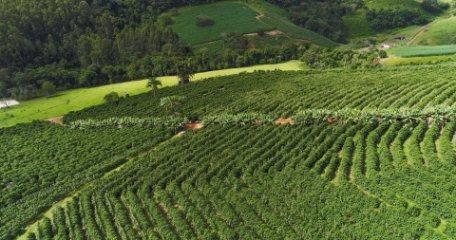 COLOMBIA Y LOS AROMAS DEL CAFÉ