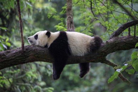 CHINA, HOGAR DEL OSO PANDA y PHUKET