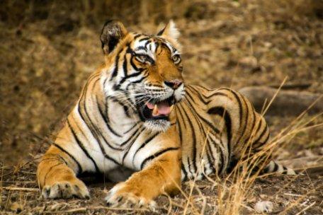 INDIA: TIGRES Y TEMPLOS