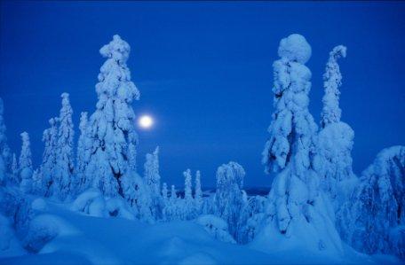 Fin de año en Ruka (Cabañas de madera)