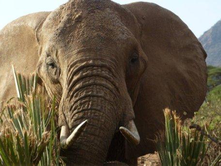 5 motivos por los que nunca deberías realizar un safari en Kenia