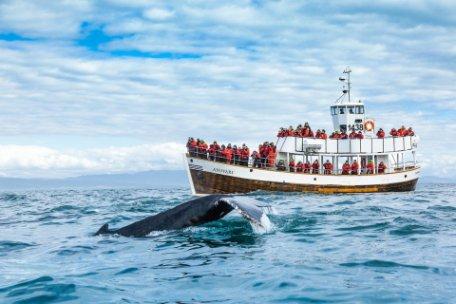 Avistamiento de ballenas sostenible en Islandia